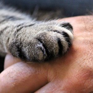 cats-paw-1375792_1920