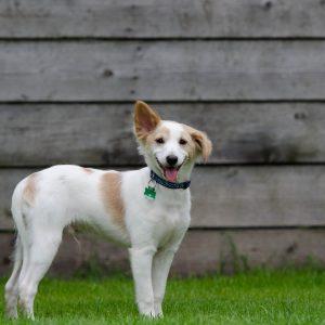puppy-750629_1920