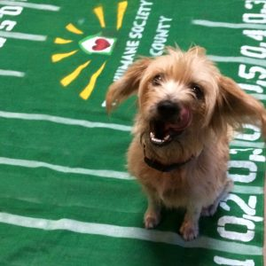 puppy-bowl-rosco