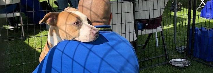 Humane Society Welcomes 15 Dogs From Areas Affected By Hurricane